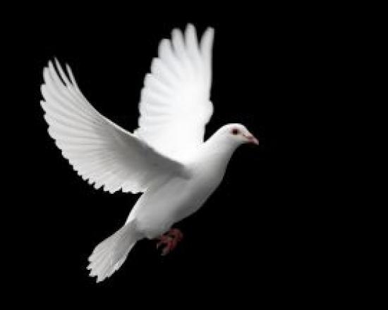 Colombe du Saint-Esprit